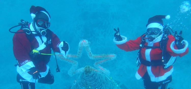 今年もクリスマスツリーすっごい!@伊豆海洋公園