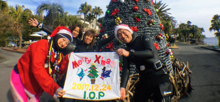 伊豆海洋公園でクリスマスダイビング!