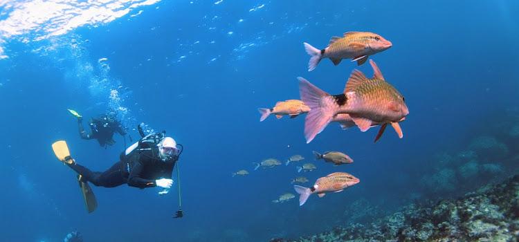 伊豆海洋公園ハンパないって。透明度30mなんだぜ