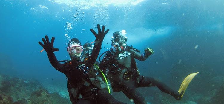 絶好調の伊豆海洋公園で体験ダイビング!