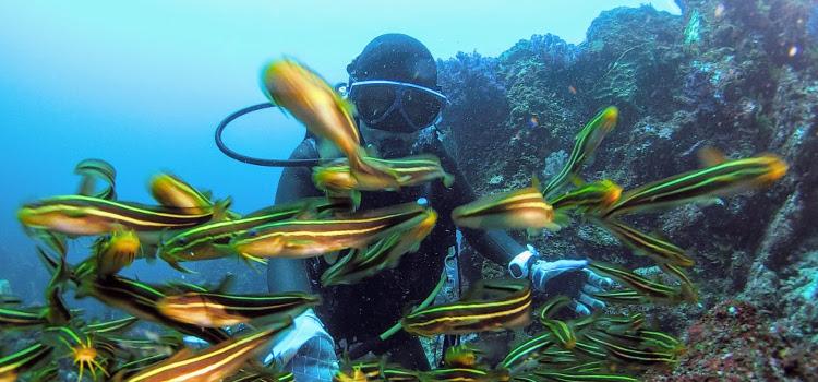透明度良好で魚が多い!最高のGWスタート!