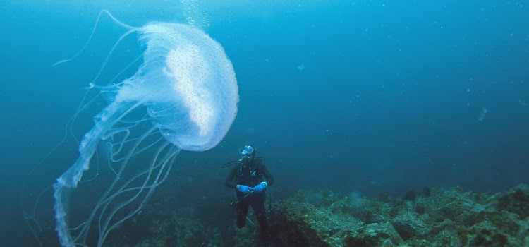 伊豆海洋公園でアマクサクラゲに遭遇!