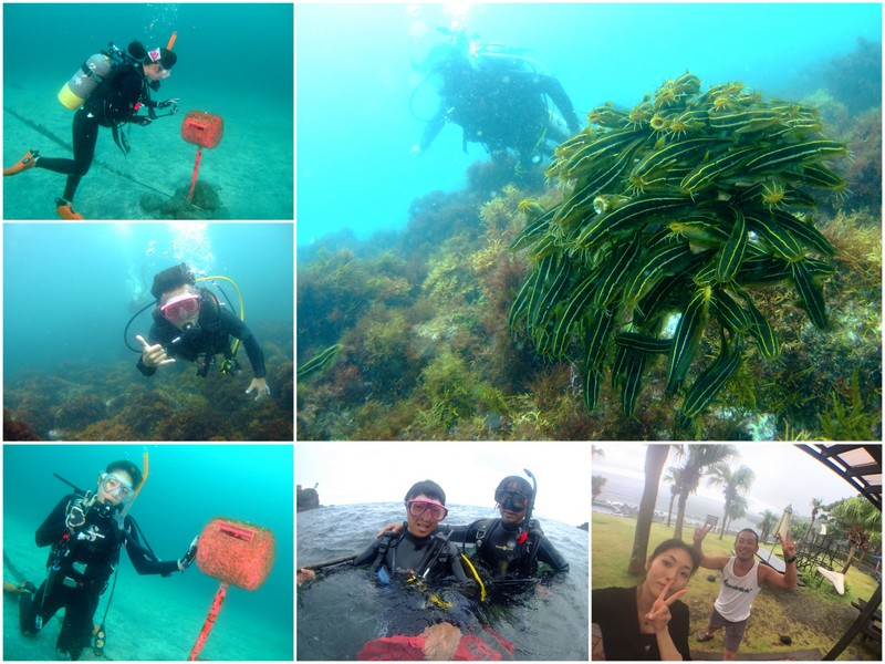 伊豆海洋公園で体験ダイビングとファンダイビング!