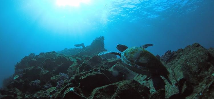 最高過ぎる海、伊豆海洋公園でダイビング!