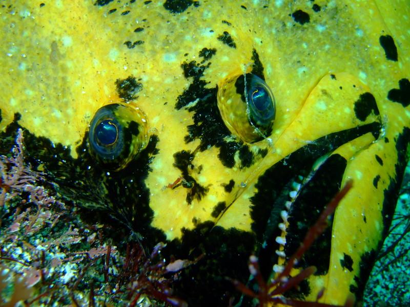 伊豆海洋公園 黄金ヒラメ
