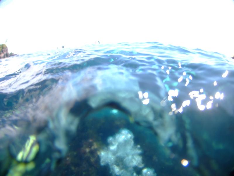 伊豆海洋公園 水面