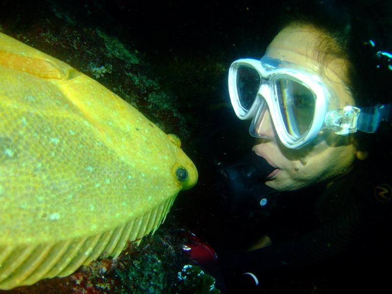 伊豆海洋公園,黄金ヒラメ
