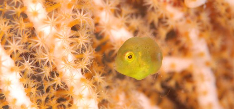 潜水注意!伊豆海洋公園で潜って来ました!