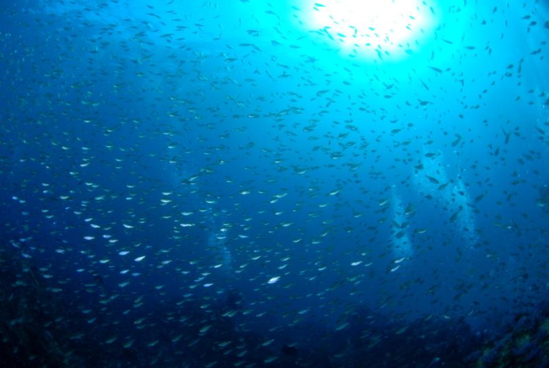伊豆海洋公園,ダイビング