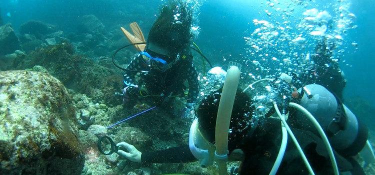 ソラスズメダイの産卵や超ちびイロカエルアンコウなど見どころ満載なベストシーズンの海!