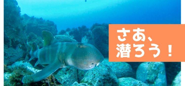 伊豆海洋公園にて富戸最後のフーカー潜水(送気式)海女さんを発見!