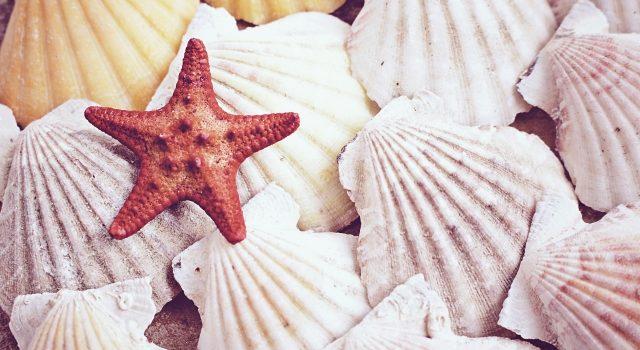 エメラルドグリーンの海!梅雨明けにまさかの夏濁り!せっかくなのでコレも楽しんじゃいましょう!