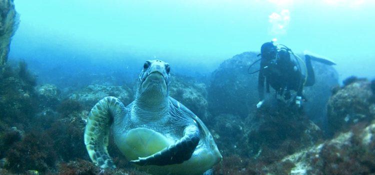 今日は右や左とあちこちでウミガメに遭遇する日でした伊豆海洋公園