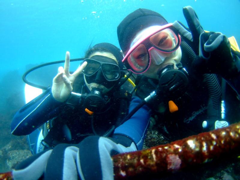 伊豆海洋公園,体験ダイビング