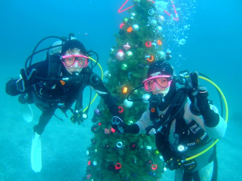 伊豆海洋公園水中クリスマスツリー!
