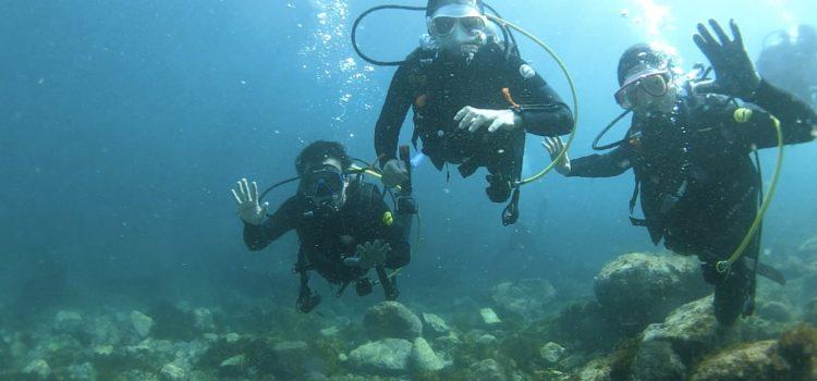 黒潮の恩恵!まるで沖縄みたいな透明度と海!珍しいウミタルが大量漂着して美しい