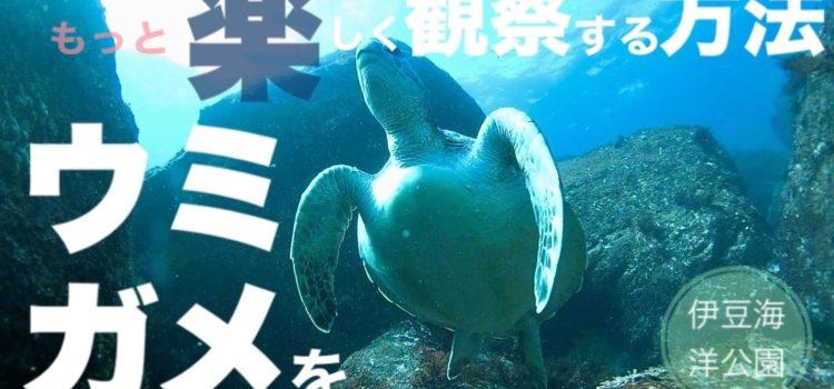 アオウミガメをもっと楽しく観察する方法!伊豆海洋公園