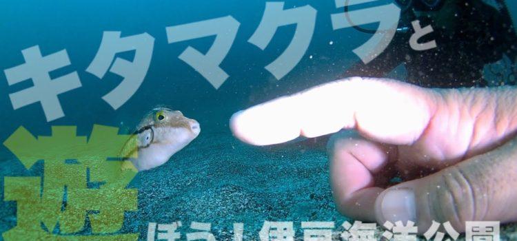 テトロドトキシン!キタマクラと遊ぼう!(猛毒あり注意)伊豆海洋公園
