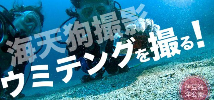 伊豆海洋公園の砂地に最強アイドルウミテング登場!
