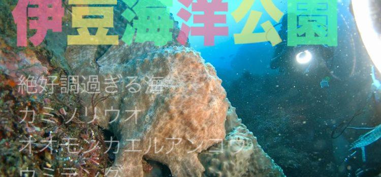 アイドル盛り沢山で面白すぎるぜ伊豆海洋公園!透明度・水温も絶好調過ぎる海