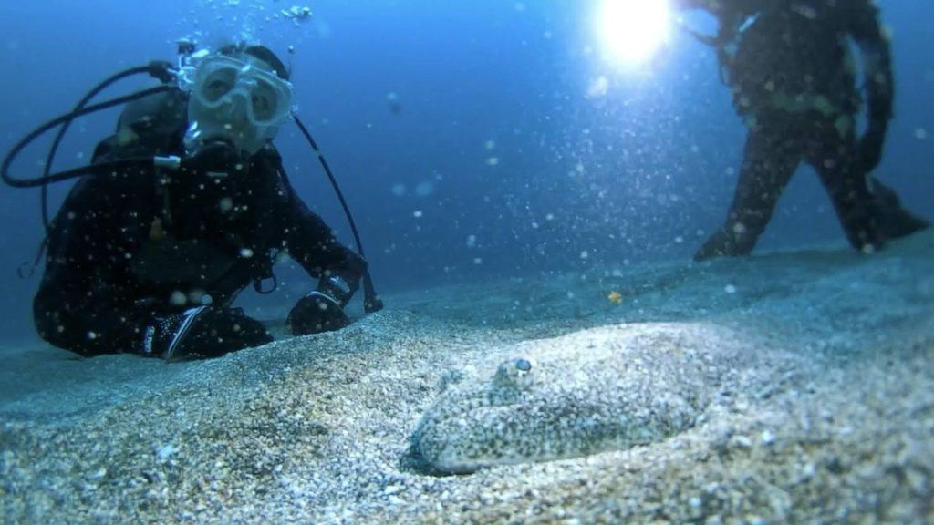 海中でのダイバーとヒラメ