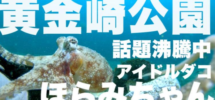 テレビ出演決定!話題沸騰中黄金崎公園の癒しメジロダコ!